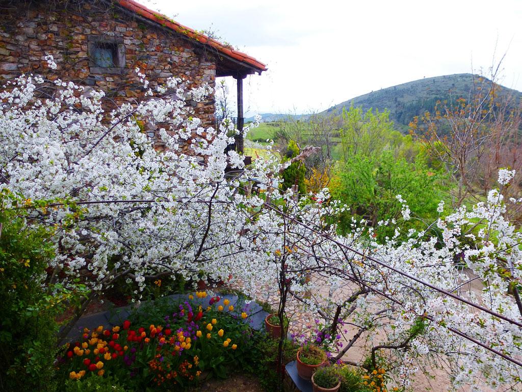 Los jardines casa rural en salamanca for Casa rural jardin del desierto